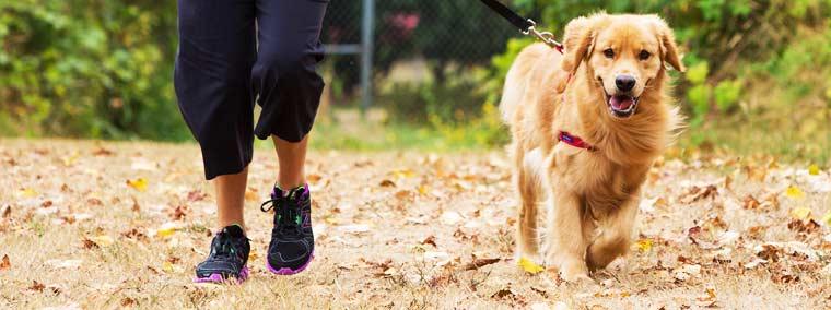 promenade chien grenoble